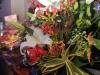 2011-11-11_jabras_020